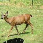 Lovely wildlife roaming the property