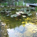 Petit étang avec nénuphars