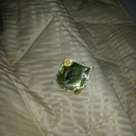 Magnum condom that was left on my bed!