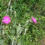 Fleurs de montagne en juin