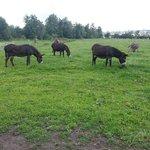 L'élevage d'ânes