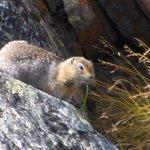 Furry little dude having lunch.
