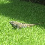 Iguana's were everywhere. Too many to name!