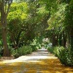 uno dei viali dei giardini
