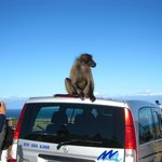 Baboons in Cape Point