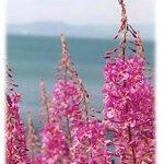 fleur réferrence du chalet