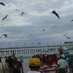 fishing boats arriving