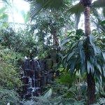 Interno serra tropicale