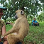 On a monkey walk with trained animal handlers
