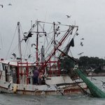 Working shrimp boat hauling in its nets. Lots of bird life to enjoy too.