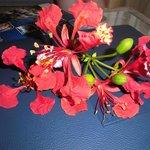 fleur accueil chambre