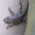 horned lizard !!