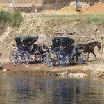 Coachmen watering their horses