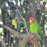 Birds of Eden, les oiseaux en semi-liberté sont peu farouches et curieux.