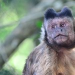 Les singes y sont en semi-liberté, soignés et nourris. Très respectueux.