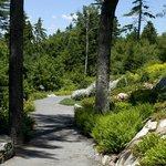 Haney Hillside Garden