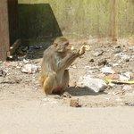 Freche Affen unterwegs!