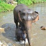 Après la visite, on découvre les autres éléphants protégés par Patara