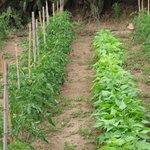 L'orto cresce a Montitundu