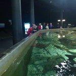 example of indoors aquarium
