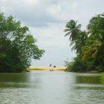 Mangrove vue sur la plage