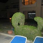 Hedge sculptor by the pool