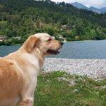 Il mio cane libero al lago