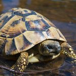 la mamma tartaruga