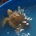 Turtle at hospital