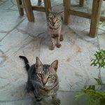 Голодные коты