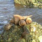 Family of Hermit Crabs