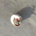 Mr. Hermit Crab