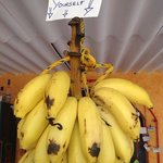 An example of the kindness - free bananas from the tropical garden.