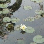 Lago jardim botânico