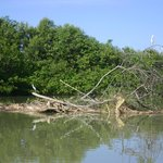 Mangrove Boat Tour