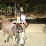 Donkey socializing with guests