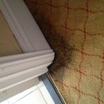 Disgusting carpet