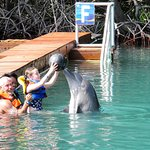 My neice interacting with the dolphins
