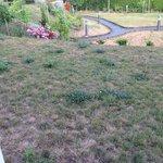 Garden needs tending