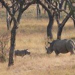 Mom and her calf on the walking safari