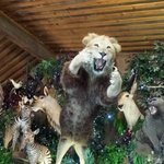 Taxidermy provided by the zoo