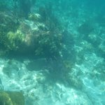 A nurse shark hiding under the coral but keeping an eye on us.