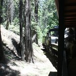 Riding the train through the pine trees