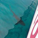 Stuart Cove's Shark Adventure