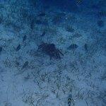 """Bahama Divers """"Barracuda Shores"""""""