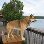 Loki checking out the lake