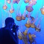 My husband photographing Medusa Jellyfish, Monterey Bay Aquarium