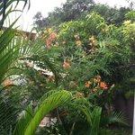 rainy tropics