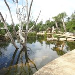 The turtle pond - ask at the welcome center about feeding the turtles