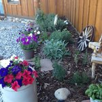 Breakfast Herb Garden